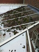 Moss on conservatory roof